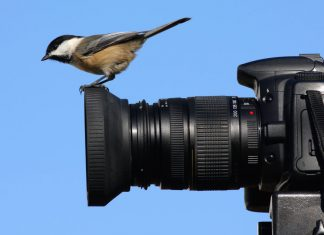 bird-on-camera