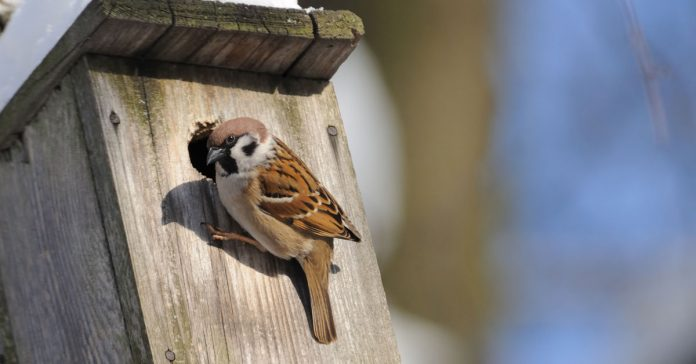 bird-nest-box