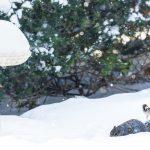frozen-bird-bath
