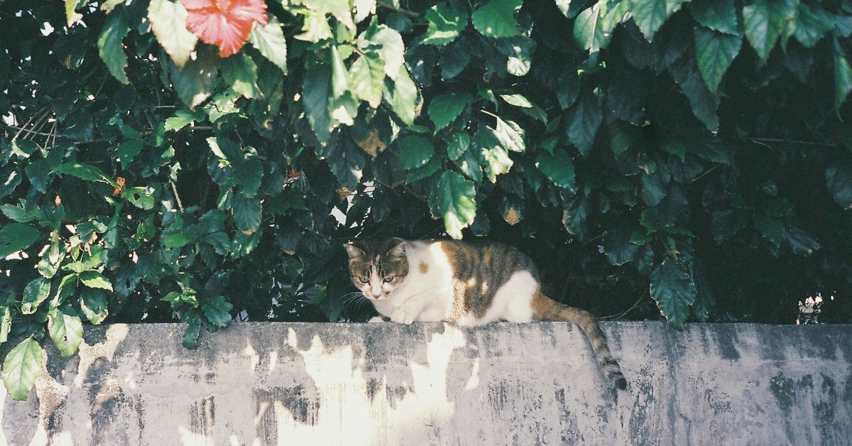 Cat lurking under a bush