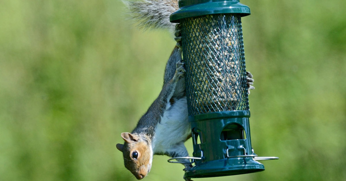 A Brome Squirrel Buster Seed Feeder from Happy Beaks