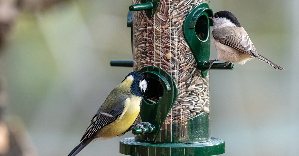 Coal tit and great tit on a seed feeder