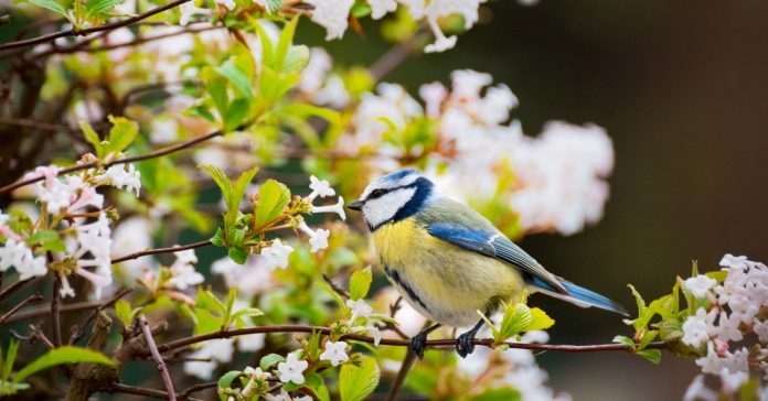 Spring Garden Birds