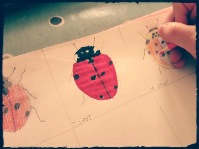 dogwooddays ladybird