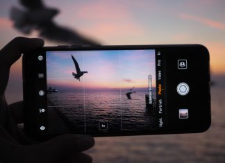 Bird photography on phone